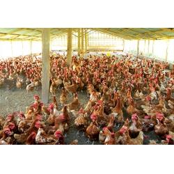 生物质(鸡粪)气化发电系统